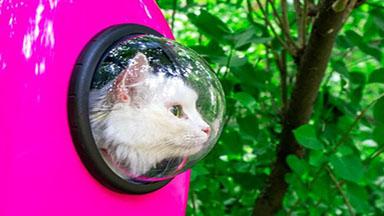 The 5 Best Cat Backpacks You Deserve