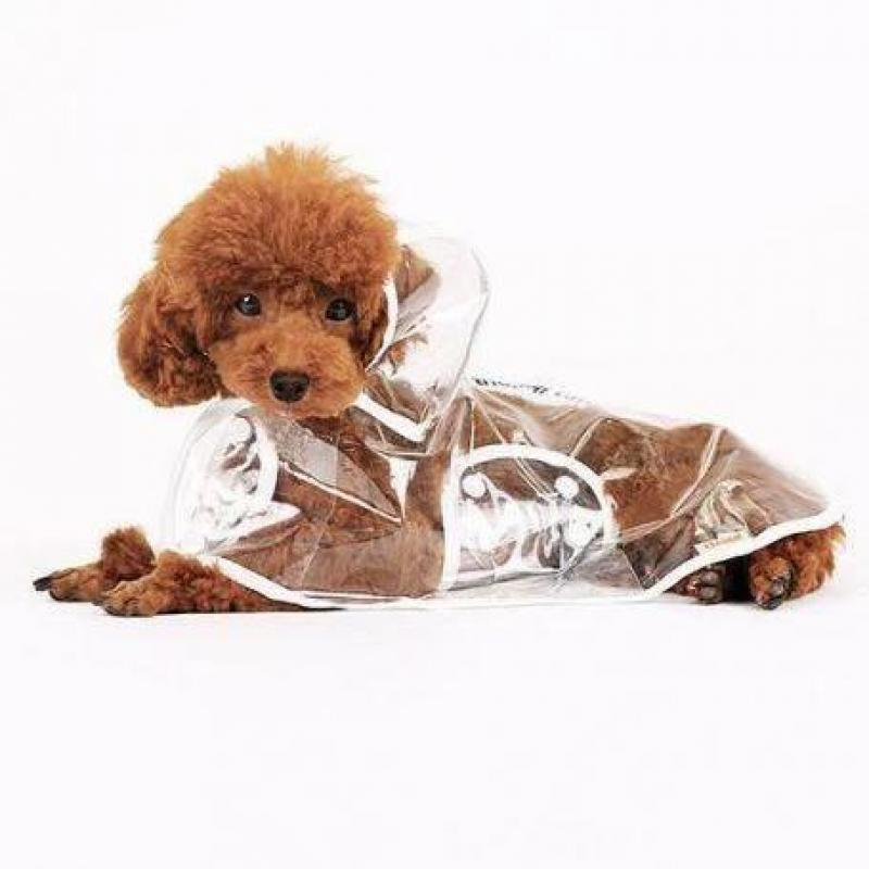 Dog Raincoat-Transparent